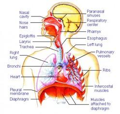 My Bronchitis