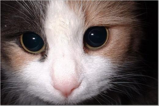 Lindsay The Cat Close Up