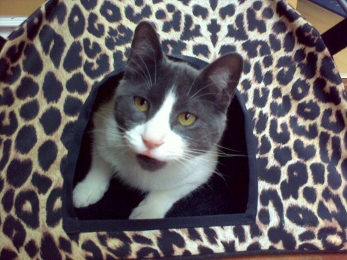 Cat cabana - a fun gift for pet lovers