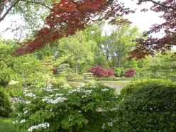 Garden Views Through Trees - A Photo Gallery