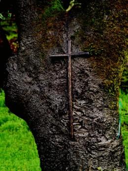 Christ Tree