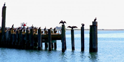 Water Birds on Pier