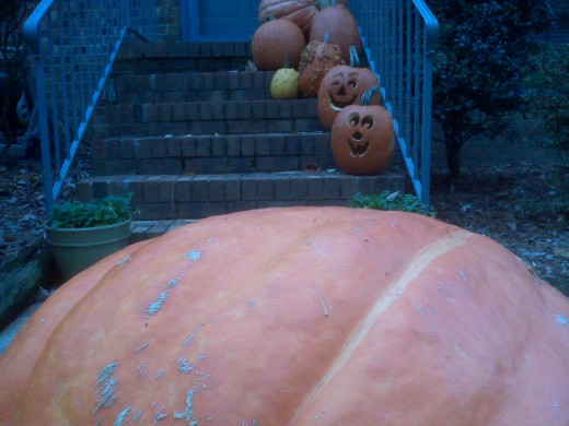 Incredibly HUGE pumpkin in the neighbor's yard for Halloween contrasting against the one of the stoop.