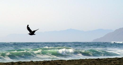 Gull Gliding on Shore