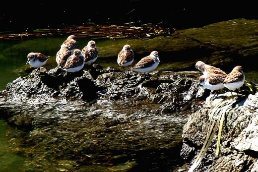 Feathered Gathering