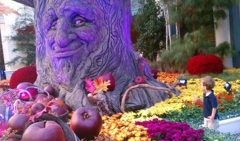 """Mom, I think that tree is looking at me."" Autumn display at the Bellagio Conservatory."