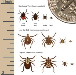 Lyme's Disease is spread by ticks