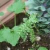 Wine Barrel Container Garden Plants: Grow Herbs & Flowers