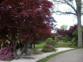 A Gallery of Japanese Maple Trees and Shrubs - Examples of their Use in Gardens