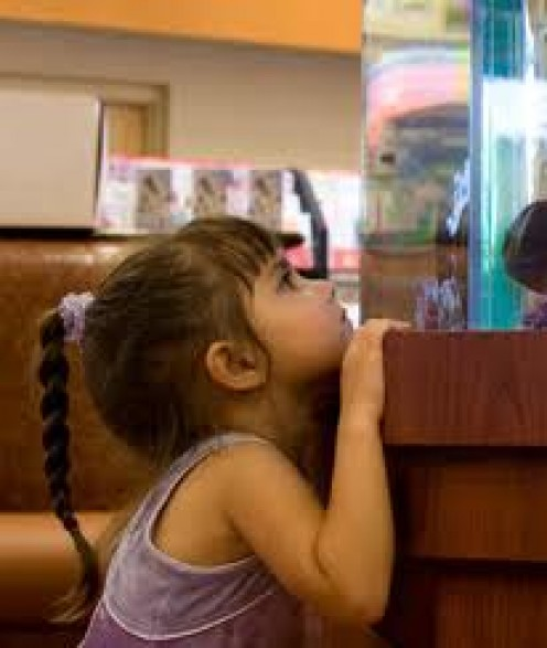The Top 7 Fish for Kids