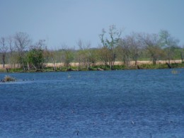 Brazos Bend State park offers many attractions to visitors like beautiful lake views.