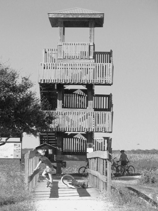 An observation tower next to one of the hiking paths allows visitors to view the marshlands from on high.