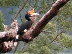 Asian Wildlife Part I: Asian Rainforest Wildlife