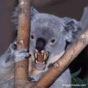 Drop Bear profile image