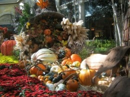 Pretty fall decorations from the Bellagio Hotel Conservatory and Botanical Gardens.