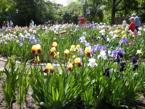 Photo 1 - People strolling through an Iris Garden.