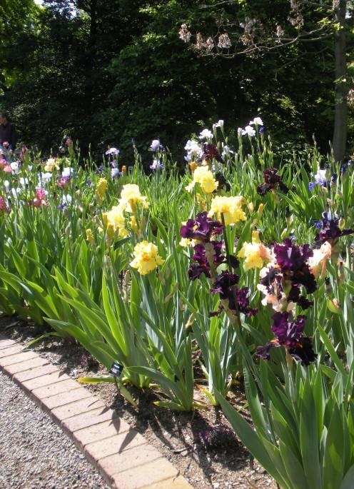 Photo 3 - Various colors of iris along a garden border of bricks and stones.