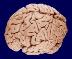 Inside The Mind Of A Murderer - Psychology & Psychiatry - Sociopathy & Psychopathy