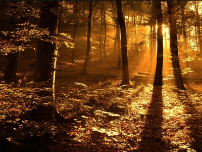 sunrays playing through the woods