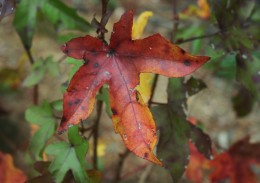 Autumn leaves aren't just pretty. They also have practical & economical uses in your garden.