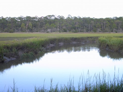 Along the way to the Jekyll Island Pier you pass wonderful scenery such as this marsh area.