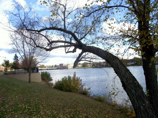Overhanging tree by riverside of Wisconsin river. Taken in fall of 2011. Across from downtown Wisconsin Rapids.