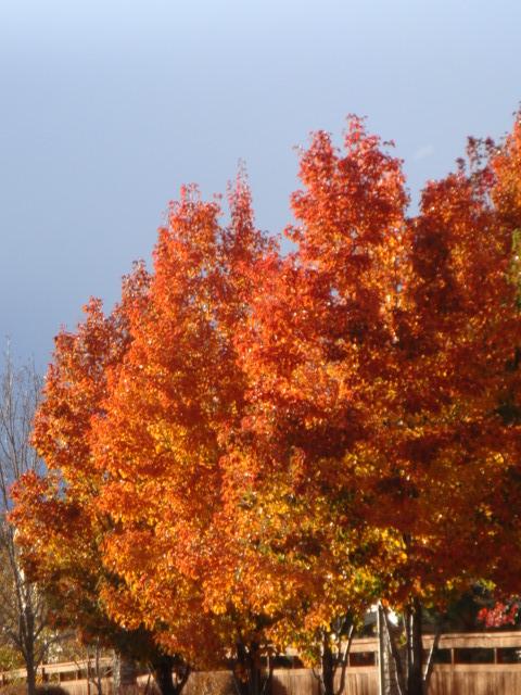 Splendor in Orange