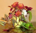 Create new Plants from Clippings