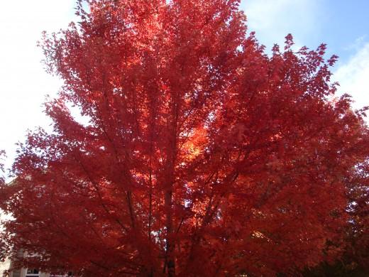 Ravishing Redness
