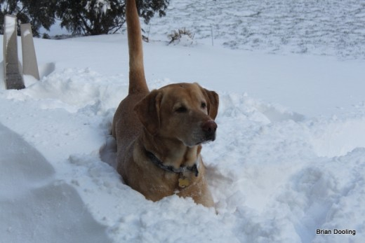 For a dog that needs to cuddle all the time inside he sure loves to lay around in the snow!
