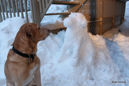 Marley starring at a snow Dog i made (January 2011)