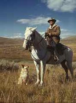 Shepherd - pingnews.com
