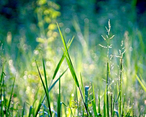 "grass photo for blending ""layer 1"""