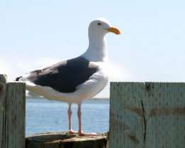 The Gull Lookout