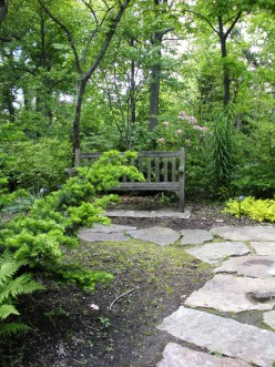 If you look in the distance, behind the bench, you will see some rhododendrons blooming in this garden.