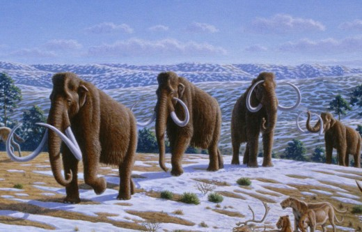 Woolly Mammoths in Spain, during the Pleistocene era.
