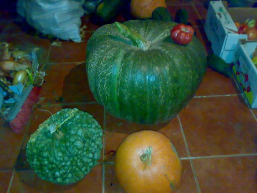 Calabaza is a term that can be applied to a variety of gourds and melons grown throughout the world.