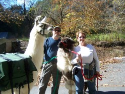 My husband with Woody the Llama and me with Peanut the Alpaca