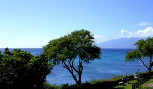 Hawaiian Ocean View
