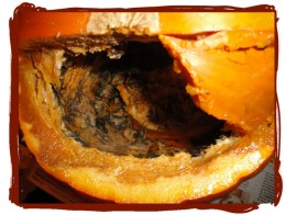 Ewww...if your pumpkin looks like this, throw it away. There's nothing you can do to salvage it.