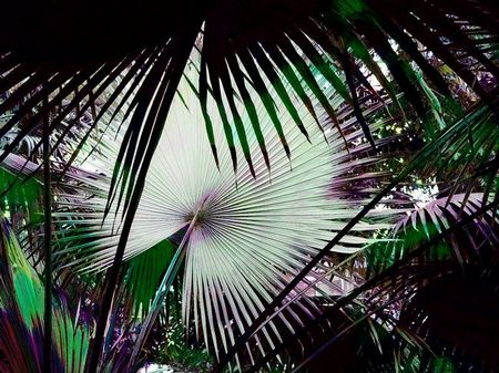 Tropical fronds Copyright Ruth Kongaika