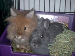 Zues with his best bunny buddy, Barnaby.