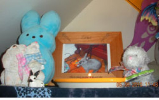 Zeus' memorial shelf.  Rest in peace little buddy.
