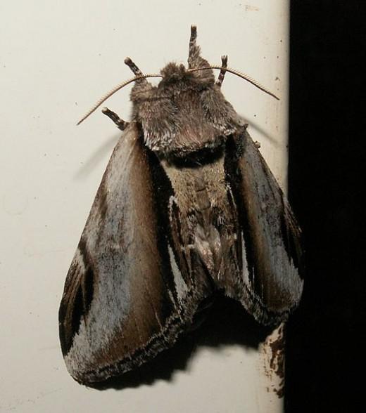 Moth - I Don't do Bugs!