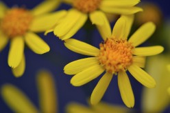 Photo Gallery of Yellow Flowers