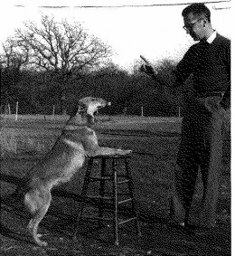 Way back in the 70's treatment for diabetes is dogs was very rudimentary! ~ Photographer: Elizabeth Bennett