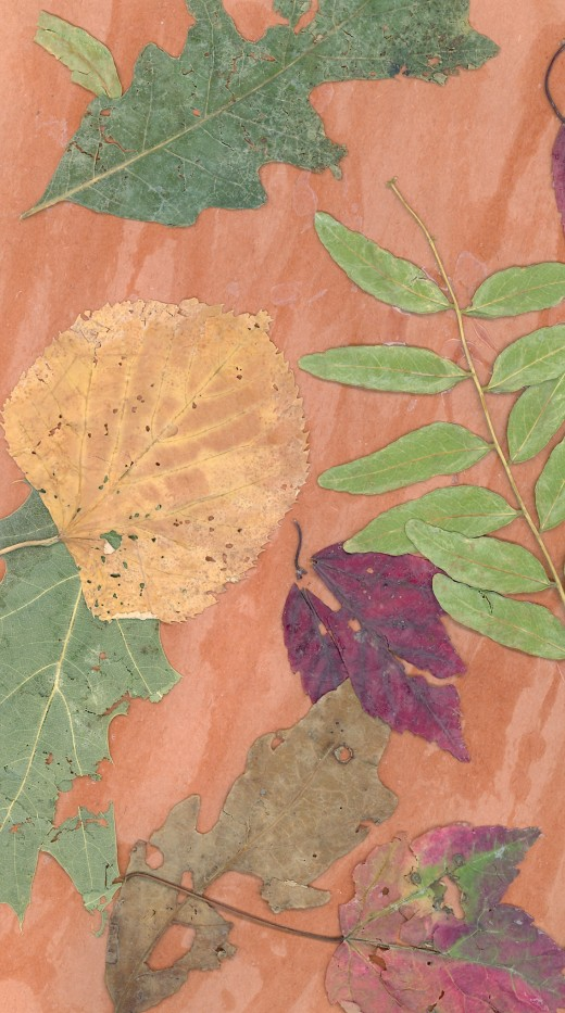 """Autumn Leaf Collage"""