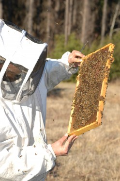 Why Keep Bees: Four Good Reasons Besides Pollination and Honey