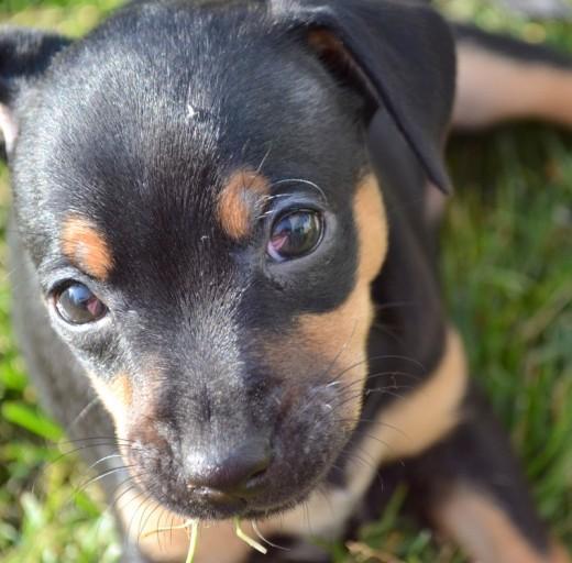 Puppy Pout