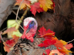 Interesting Thanksgiving Day Facts